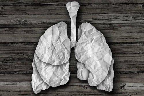 دانشمندان موفق به زندهنگهداشتن ریهها در خارج از بدن شدند