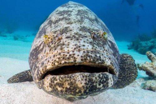 تلاش برای بهکارگیری جانوران دریایی بهعنوان جاسوس