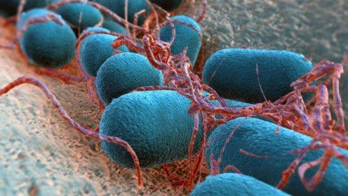 کشف جدید دانشمندان در مورد باکتری E.coli؛ دوست یا دشمن؟